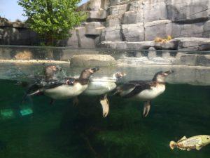 パリの動物園のペンギン